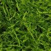 Зелёная липа (арт. 034)
